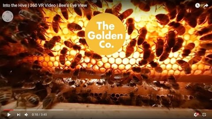 Into the Hive   360 VR Video   Bee's Eye View