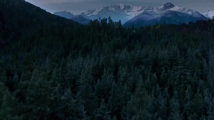 grizzly.2014.720p.bluray.x264-rusted