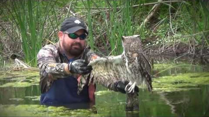 Man Saves Owl Wrapped In Fishing Line.