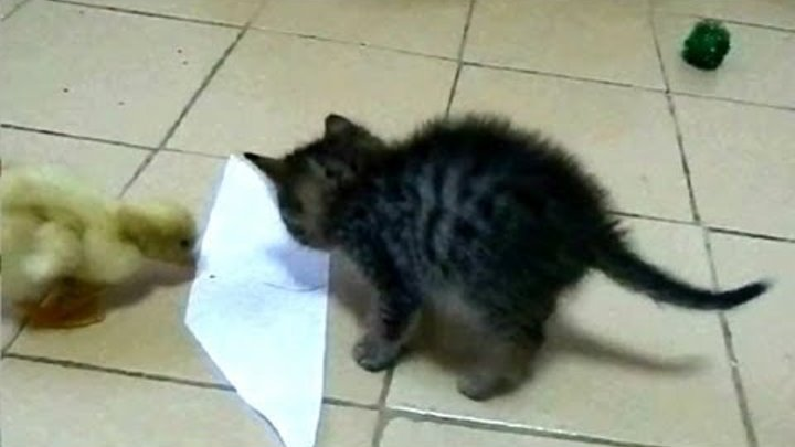 Kitten and Duckling VS Sticky Paper