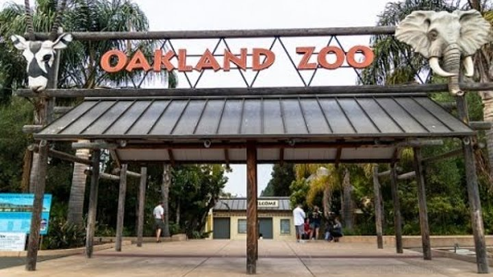 oakland zoos newest addition - 600×450