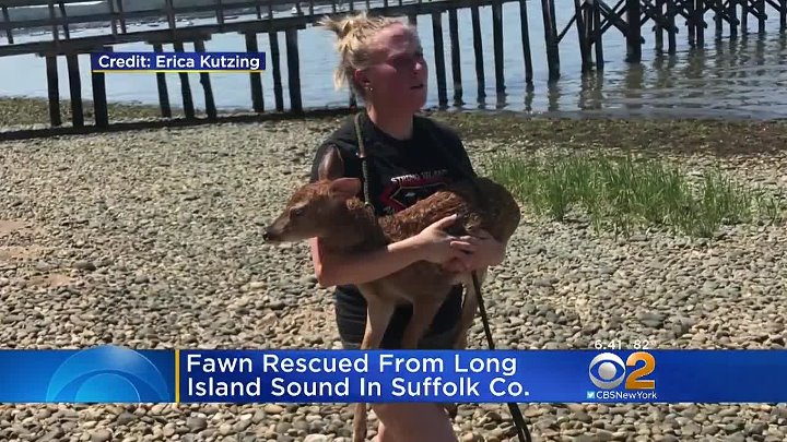 Dog, Owner Team Up To Rescue Stranded Fawn (online-video-cutter.com)