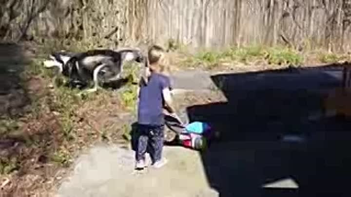 Adorable Alaskan Malamute playing with kids _ Dog Loves Baby Compilation_low.mp4