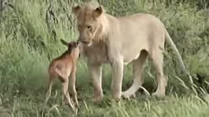 The Compassionate Beast (2017⚪️ 🔴 🔵) A MUST SEE VIDEO FOR ANIMAL LOVERS!_low.mp4