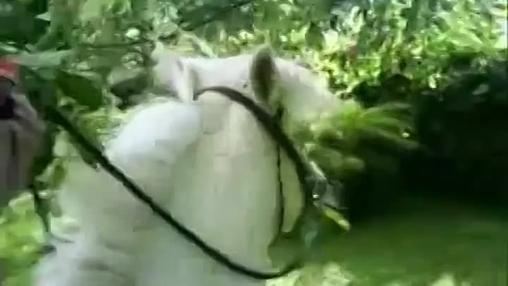 3 years old girl riding pony