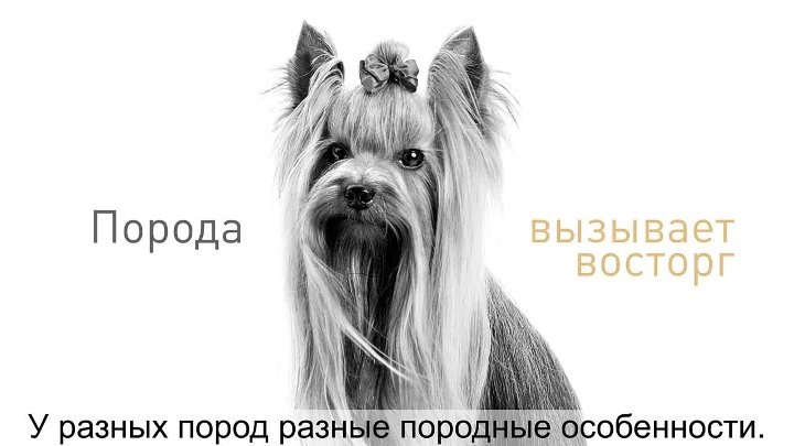 Breeds Dogs