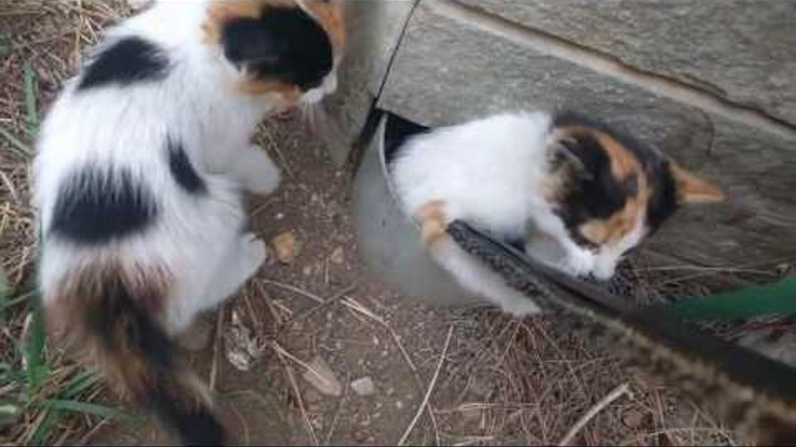 170526193 Man Saves Kitten From Pipe, Doesn't Expect A Thank You
