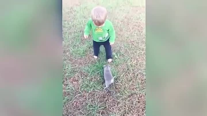 Baby and Cat Fun and Fails