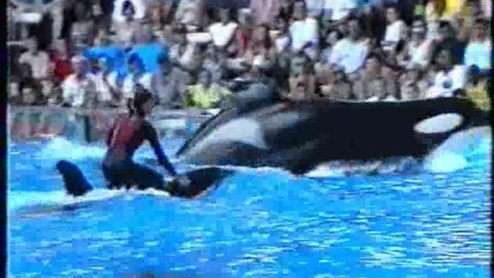 Killer Wahle attacke Show Orlando Seaworld 2000 Munich