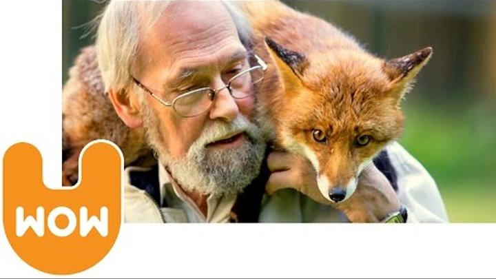 Man Lives With a Pet Fox