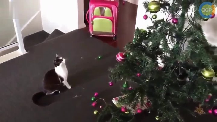 Коты и Ёлки 2 (Cats and Christmas Trees 2)