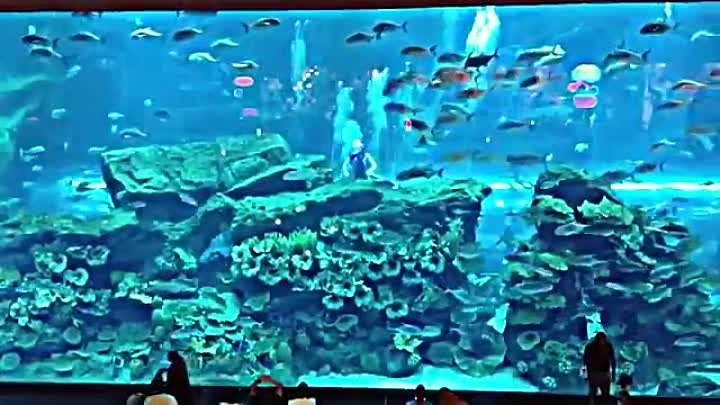 Шоу русалок, Дубай аквариум-Trio Mermaid Show 2013 - The Dubai Mall Aquarium-Русалочка