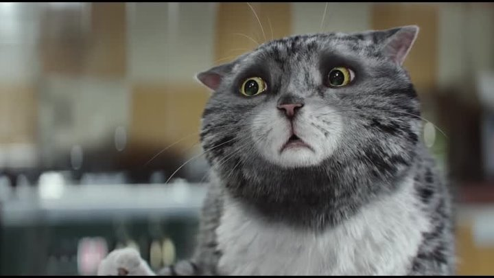 Sainsburys OFFICIAL Christmas Advert 2015 Mogs Christmas Calamity