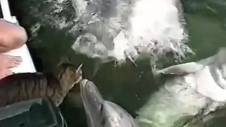 Cats and the dolphins playing