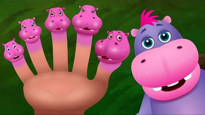 Finger Family Hippo | ChuChu TV Animal Finger Family Nursery Rhymes Songs For Children