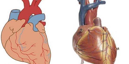 Самое эффективное лечение невроза сердца – психологический настрой ...