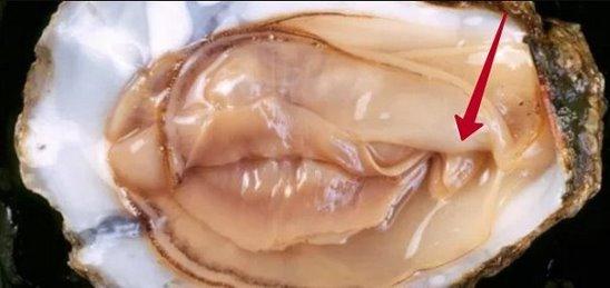 мировых тенденций женские клитора в сперме заботимся том, чтобы